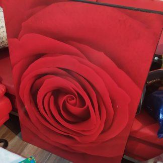 תמונה שושנה אדומה